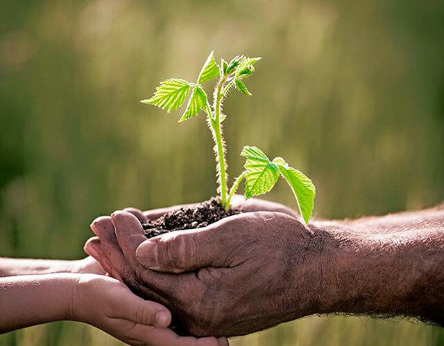 Educar para una ciudadanía ecológica